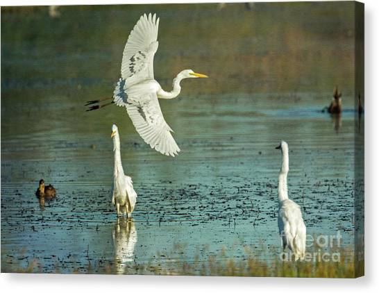 Canvas Print featuring the photograph Morning Gold by Craig Leaper
