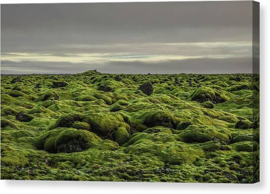 Moss Covered Lava Field On Route 1 Canvas Print