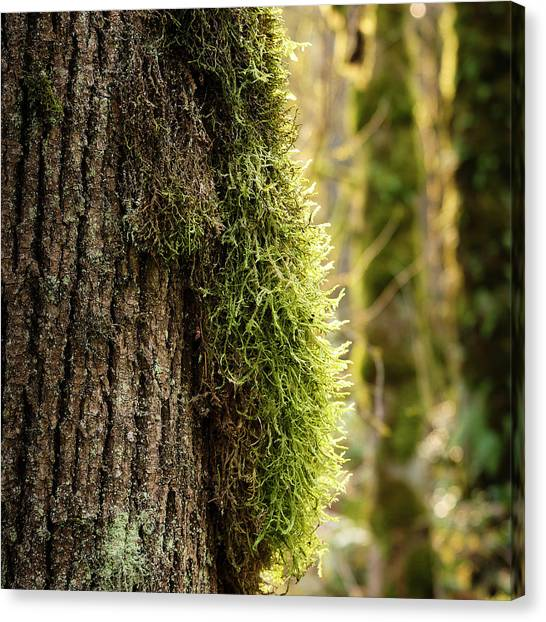 Moss On Bark Canvas Print