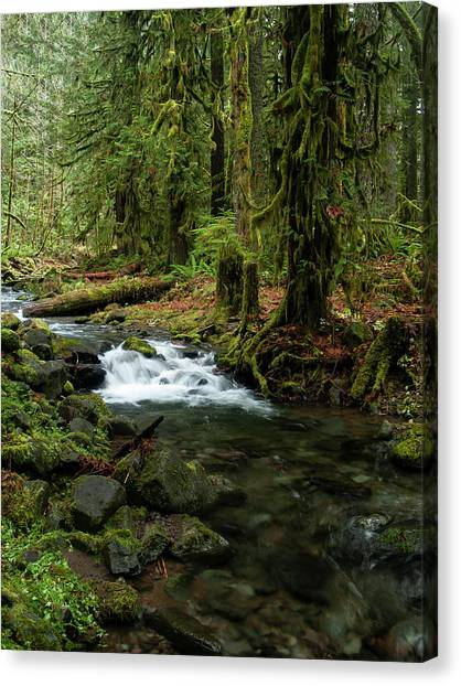 Mossy Cascade Canvas Print