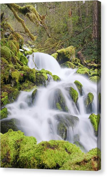 Canvas Print featuring the photograph Mossy Falls by Nicole Young