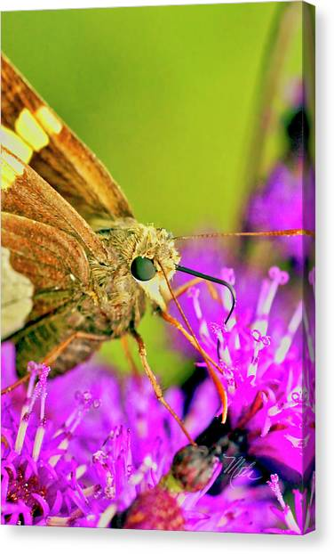 Moth On Purple Flower Canvas Print