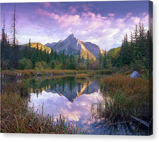 Mount Lorette And Spruce Trees Canvas Print by Tim Fitzharris/ Minden Pictures