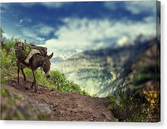 Mountain Donkey Canvas Print