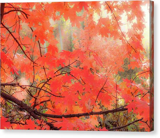 Mountain Maple Color Canvas Print by Leland D Howard