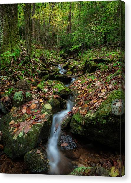 Mountain Stream - Blue Ridge Parkway Canvas Print