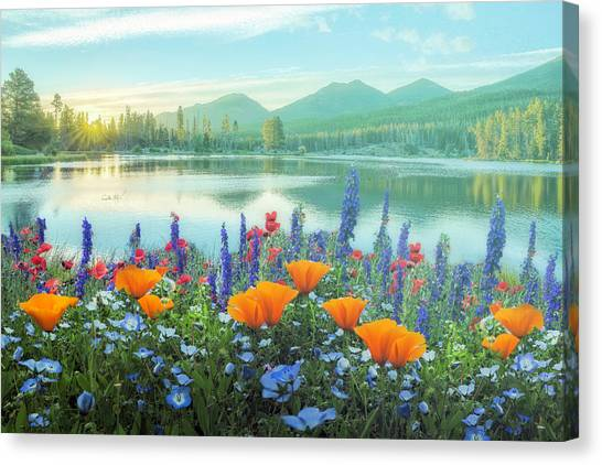 Canvas Print - Mountain Summer Blooms Misty Morning by Debra and Dave Vanderlaan