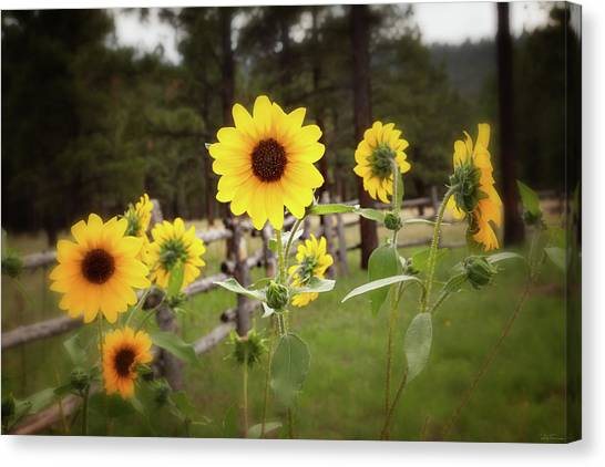 Mountain Sunflowers Canvas Print