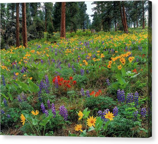 Idaho Canvas Print - Mountain Wildflowers by Leland D Howard
