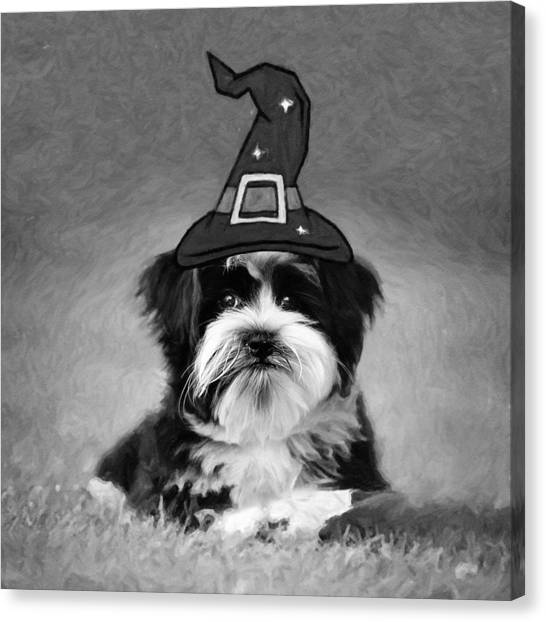 Canvas Print featuring the photograph Mr. Wizard by Sue Collura