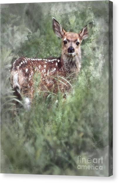 Canvas Print featuring the photograph Mule Deer Fawn by Brad Allen Fine Art