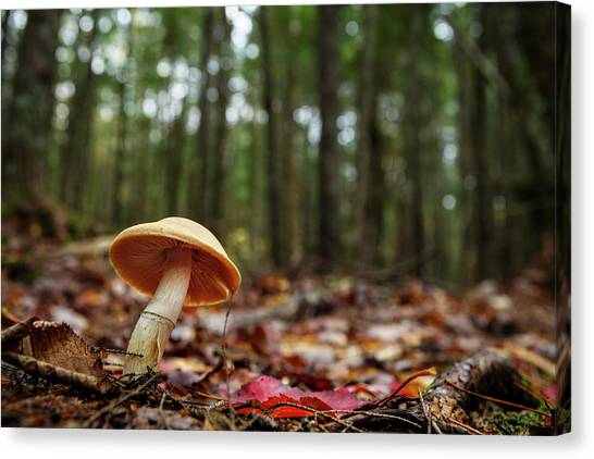 Mushroom Growing In Forest Canvas Print by Laszlo Podor