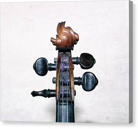 Musical Toupee Canvas Print by Steven Digman