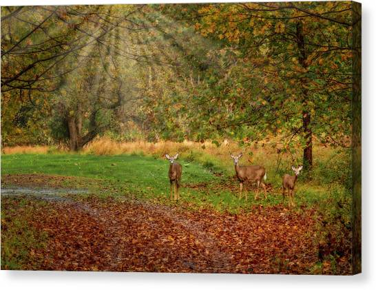 Canvas Print featuring the photograph My Deer Family by Susan Candelario