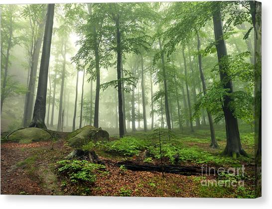Woodland Canvas Print - Mystical Foggy Forest On The Slope by Kritskiy-ua