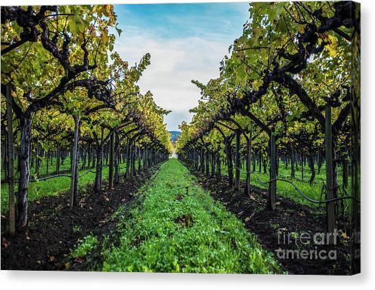 Sonoma Valley Canvas Print - Napa In Color by Jon Neidert