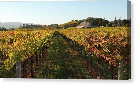 Napa Valley Vineyard In Autumn Canvas Print by Leezsnow