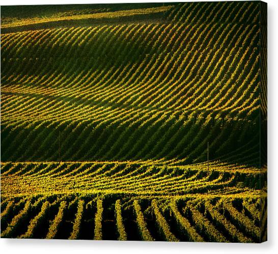 Sonoma Valley Canvas Print - Napa Valley Vineyard by Photographer Chris Archinet