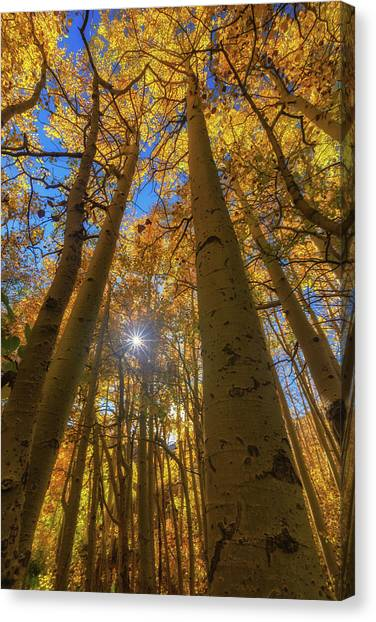 Canvas Print featuring the photograph Natures Gold by Tassanee Angiolillo