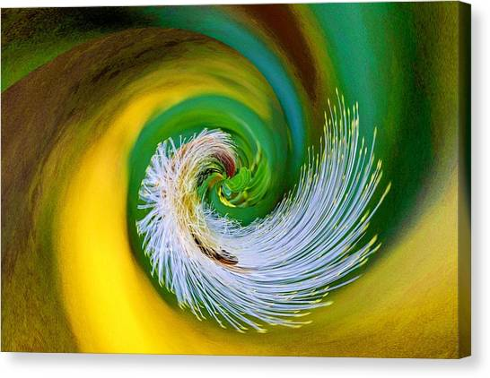 Nature's Spiral Canvas Print