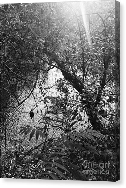 Canvas Print featuring the photograph Naturescape Black And White by Rachel Hannah