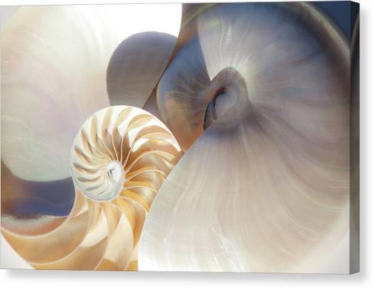 Nautilus 0442 Canvas Print