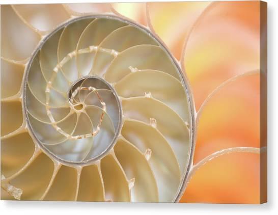 Nottinghamshire Canvas Print - Nautilus Shell Fibonacci Spiral by Doug Chinnery