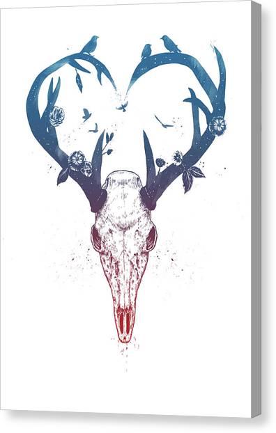 Deer Antler Canvas Prints Fine Art America