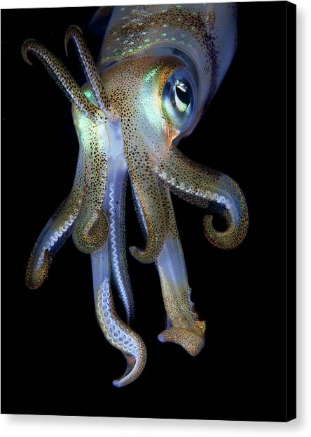 Night Observer Canvas Print by Nature, Underwater And Art Photos. Www.narchuk.com