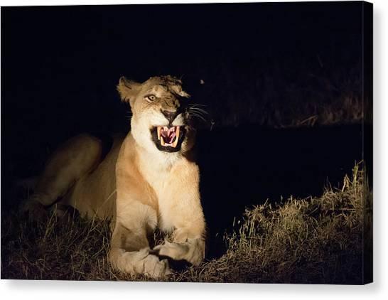 Nightmare Lioness Canvas Print