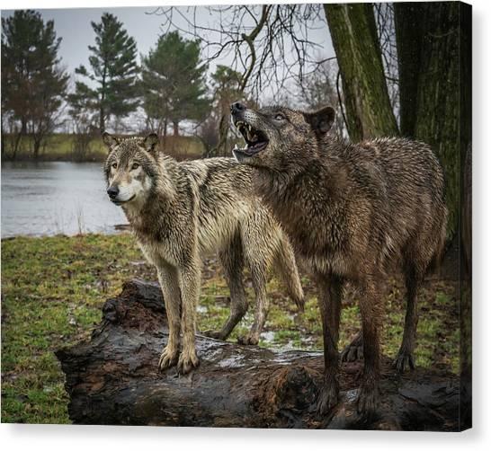 Noisy Wolf Canvas Print