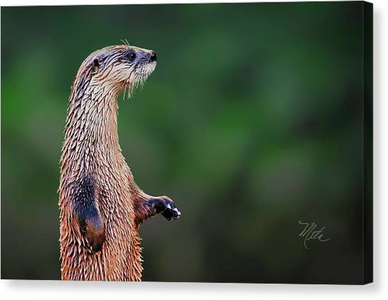Norman The Otter Canvas Print