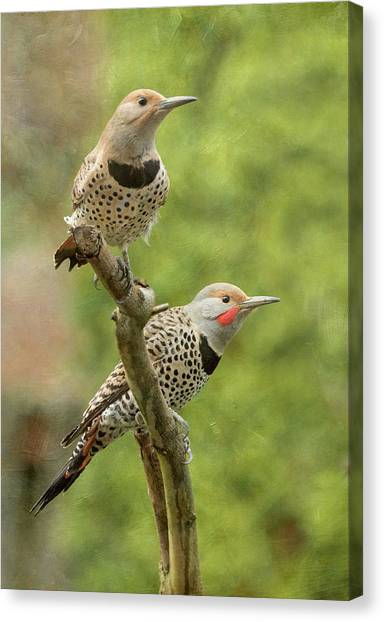 Northern Flicker Canvas Print - Northern Flicker Couple by Angie Vogel