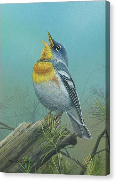 Northern Parula  Canvas Print