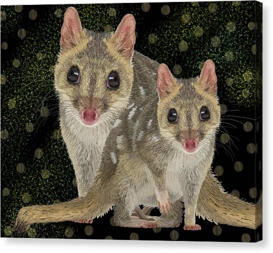 Northern Quoll 3 Canvas Print