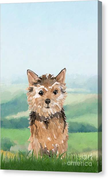 Purebred Canvas Print - Norwich Terrier by John Edwards