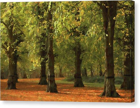 Nottinghamshire Canvas Print - Nottinghamshire, England, Uk, Clumber by Chris Upton
