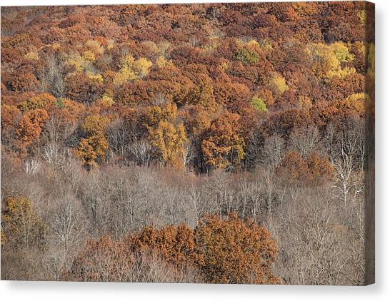 November Color - Canvas Print