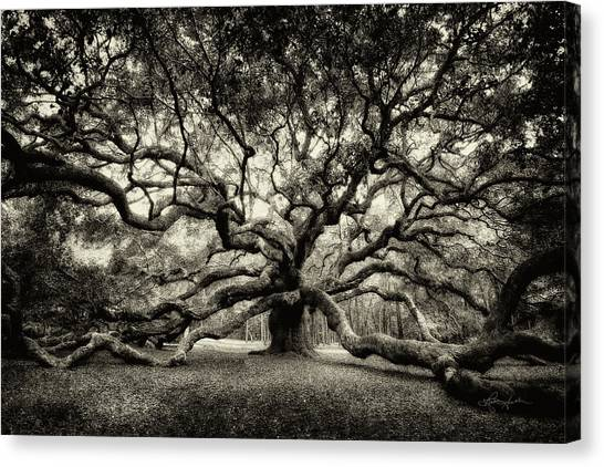 Oak Of The Angels - Sepia Canvas Print