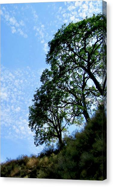 Oaks And Sky Canvas Print
