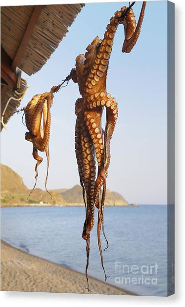 Protein Canvas Print - Octopus Drying In The Sun In The Greek by Stockcube