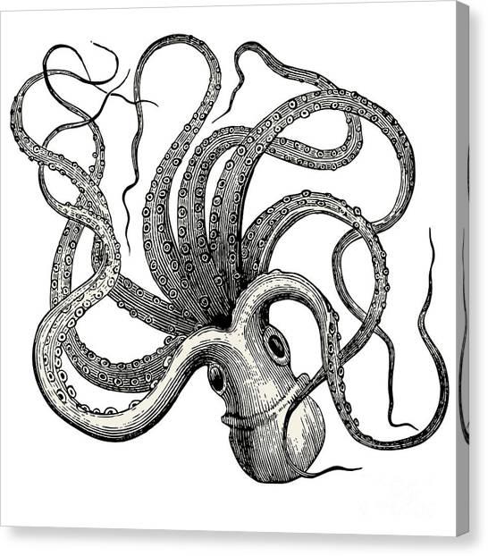 Zoology Canvas Print - Octopus Octopus Vulgaris - Vintage by Lynea