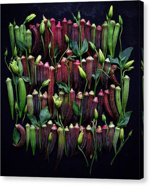 Okra Colors Canvas Print