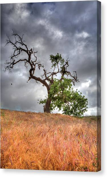 Old Oak Tree Canvas Print
