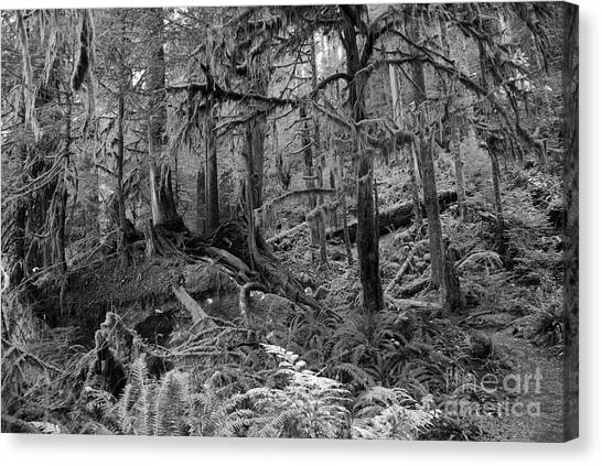 Olympic Rainforest Canvas Print