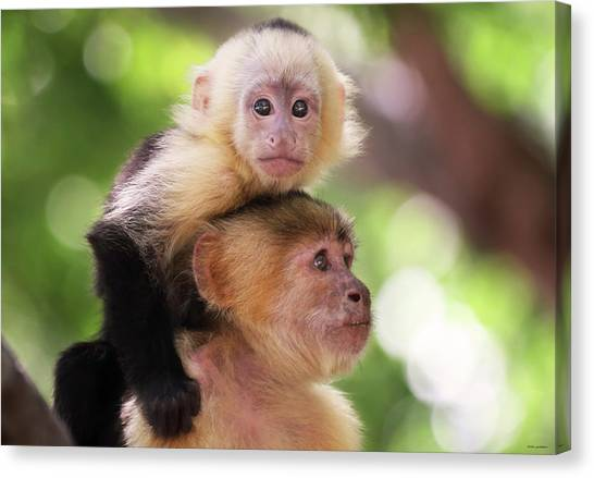 One Of Those Days When You Just Can't Seem To Get The Monkey Off Your Back Canvas Print