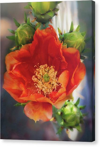Canvas Print - Orange Cacti Flower  by Saija Lehtonen