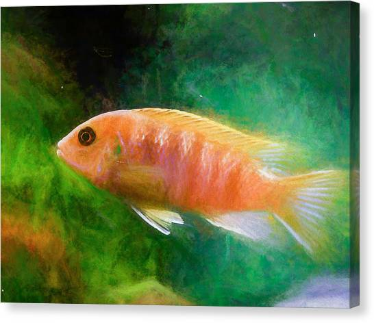 Orange Cichlid Chalk Smudge Canvas Print