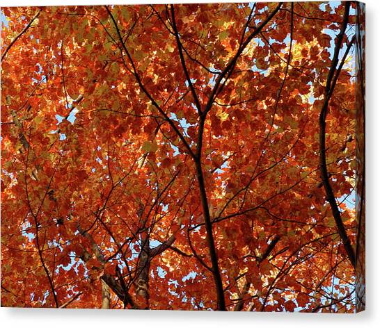 Orange Everywhere Canvas Print