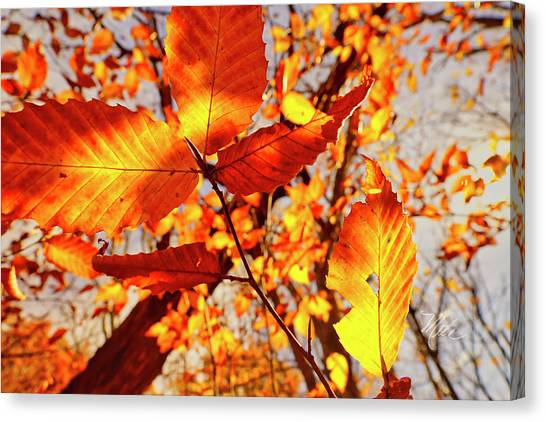 Orange Fall Leaves Canvas Print
